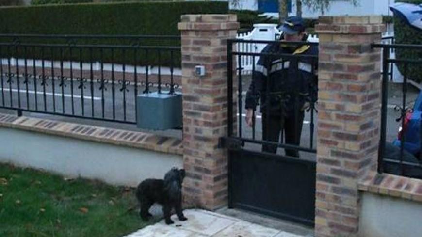 Auvergne : Agressions canines sur les facteurs en forte hausse