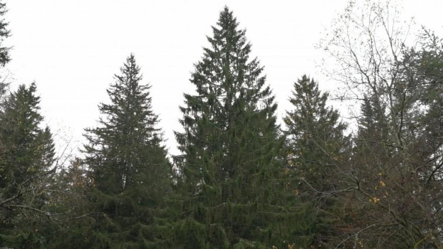 Clermont-Ferrand : le sapin de Noël arrive !